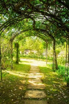 Arch green soft natural path walkway